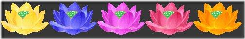 sepa-lotus-1-1.jpg